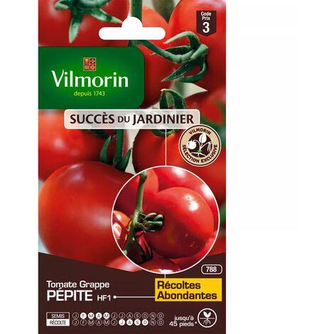 Sachet graines Tomate Grappe Pépite HF1