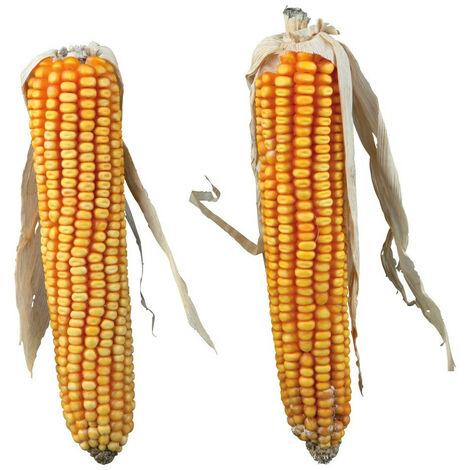 Epis de maïs total 250 gr, deux épis de maïs