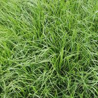 DSV COUNTRY Öko 2213 25 kg Bio Weidesamen Grassamen Trockenlage Schnittnutzung