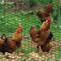 Grillage a poule avec fils 25mm en PVC gaine vert 1x25M