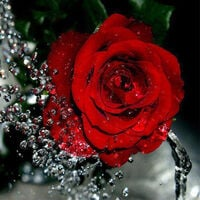 Diy 5D Diamant Peinture Rose Rouge Strass Broderie Pleine Drill Gem Photos Wall Art Artisanat Et Decoration