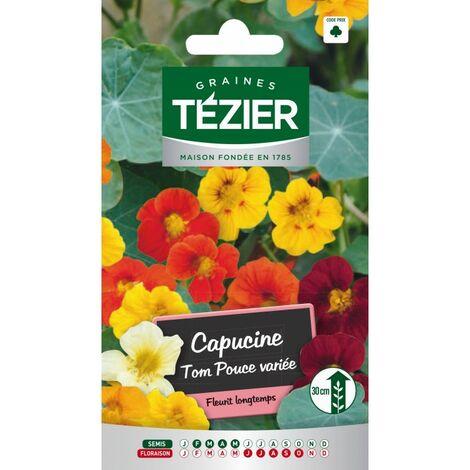 Tezier - Capucine naine Tom Pouce variée -- Fleurs annuelles