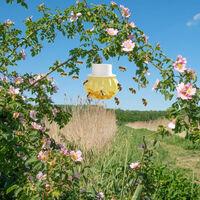 Trappola per vespe per api calabrone, insetto acchiappapiia Riutilizzabile appeso ape giacche gialle Trappola per esterni dissuasore di vespe per apicoltori,Giallo