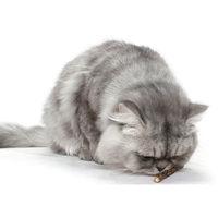20PCS Cat Catnip Silvervine Stick Toy Brown