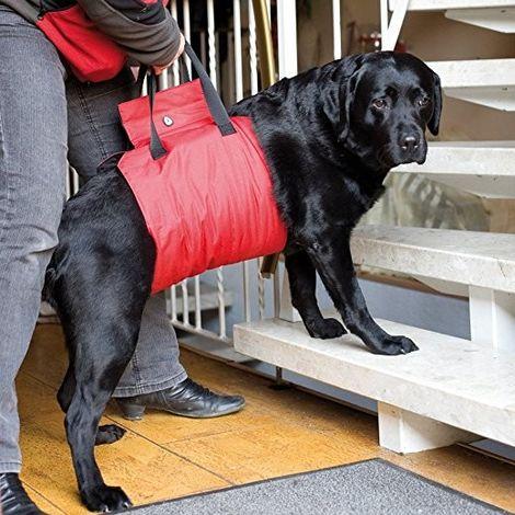 Harnais de soutien antérieur pour chiens handicapés ou à mobilité réduite Désignation : Harnais de soutien MORIN IMPORT 227300