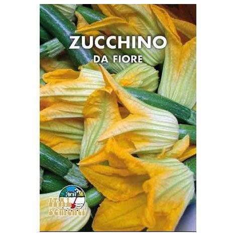Zucchino genovese da fiore (Semente)
