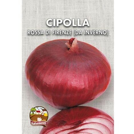 Cipolla rossa di Firenze o Toscana (Semente)