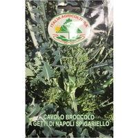 Cavolo broccolo a getti di Napoli Spigariello (Semente)