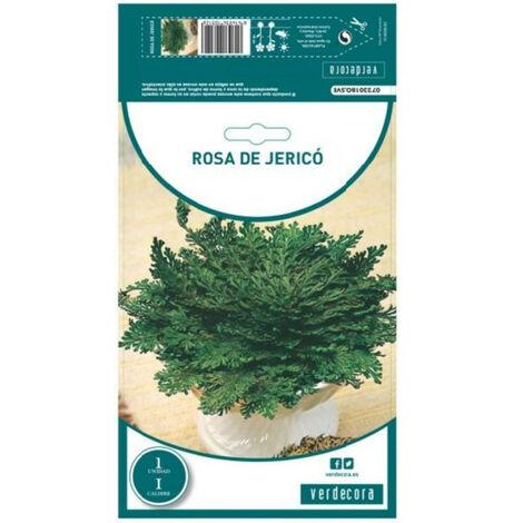 BULBO ROSA DE JERICO 1 UD