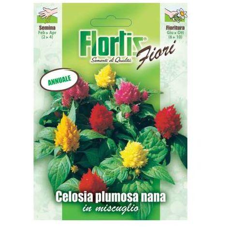 Celosia Plumosa Nana Mix