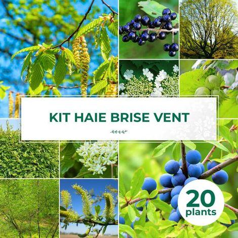 Kit Haie Brise-Vent - 20 Jeunes Plants -