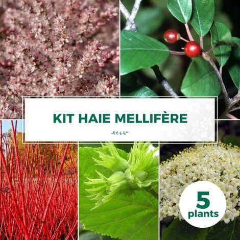 Kit Haie Mellifère - 5 Jeunes Plants -