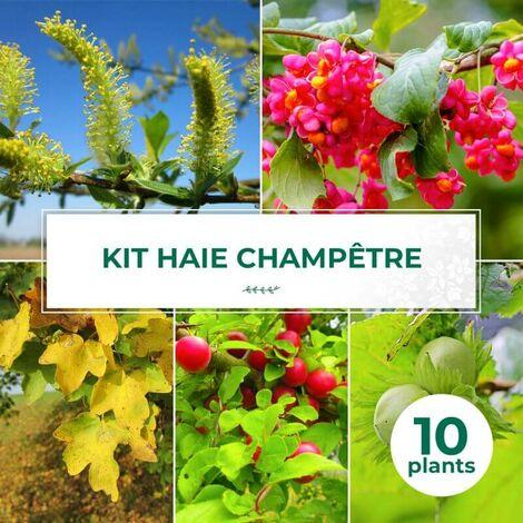 Kit Haie Champêtre - 10 Jeunes Plants -
