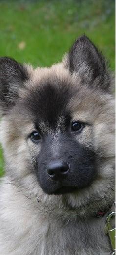 Comment choisir un anti-puces et antiparasitaire pour chien ?