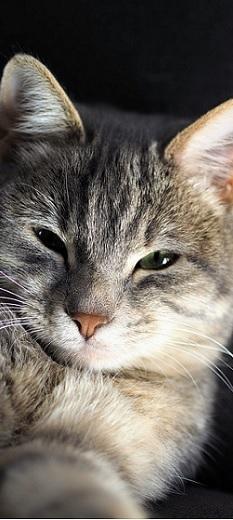 Come scegliere un collare o una pettorina per gatti