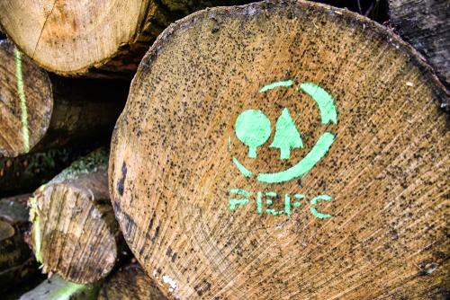 Bois exotique ou bois européen : focus sur les labels écologiques