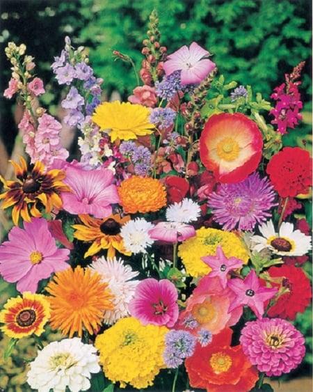 Qué flores sembrar o plantar en junio