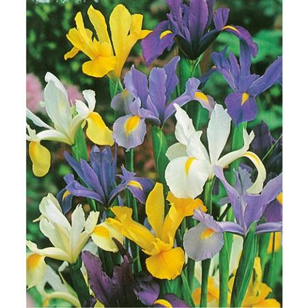 Qué flores plantar en mayo