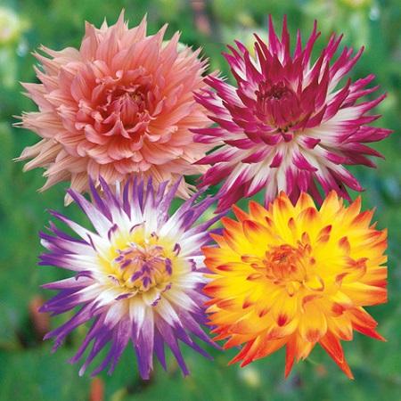 Cómo elegir una mezcla floral