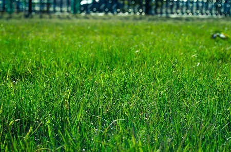 When should I sow turf or plant the lawn?