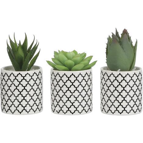 Cómo elegir cactus y crasas
