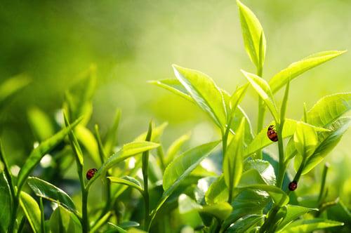Les 11 plantes anti nuisibles pour le jardin et la maison