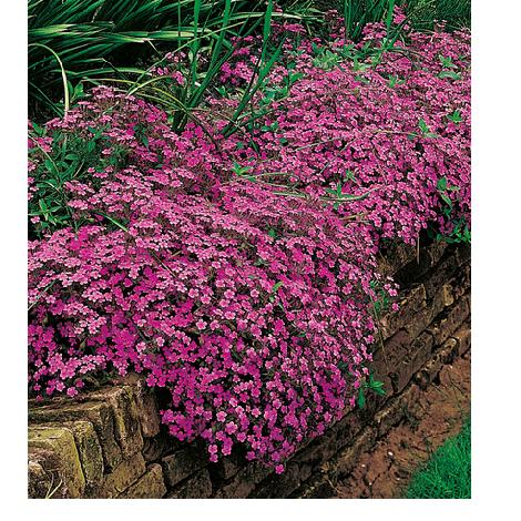 Quelles sont les plantes de rocaille | Guide complet