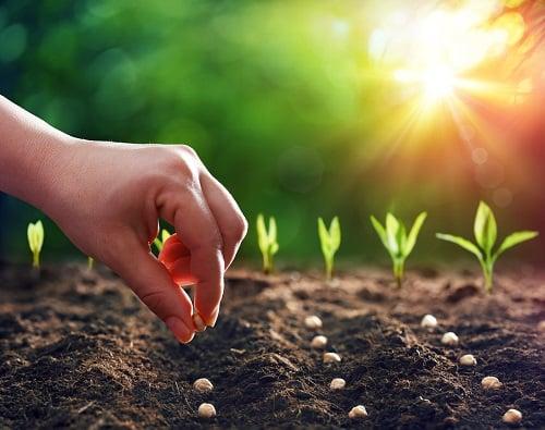 Comment préparer  ses semis