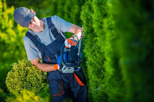 your trees and shrubs