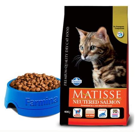 Dry cat food buying guide