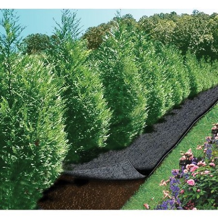 Conifères, arbres et arbustes : comment choisir