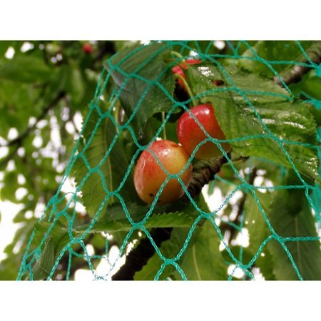 How To Protect Your Fruit Trees Against Birds And Insects