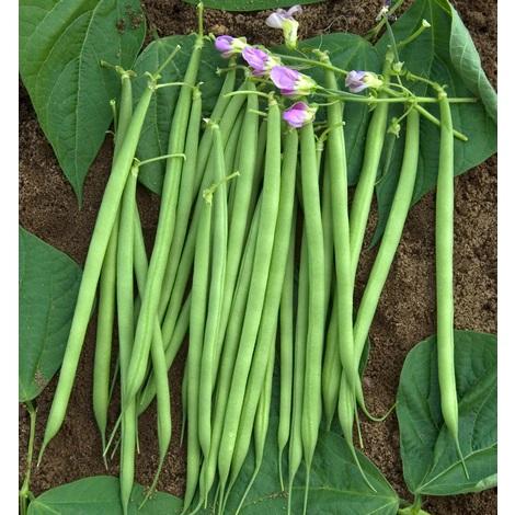 Calendrier des semis et plantations des principaux légumes