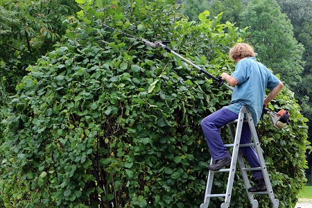 What tools should  I use to trim a hedge?