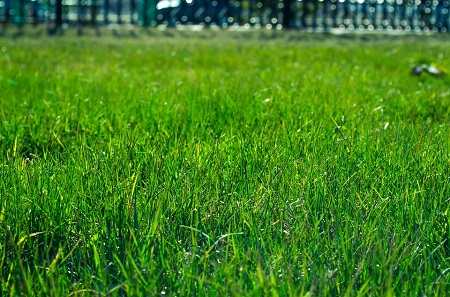 How to reseed your lawn?