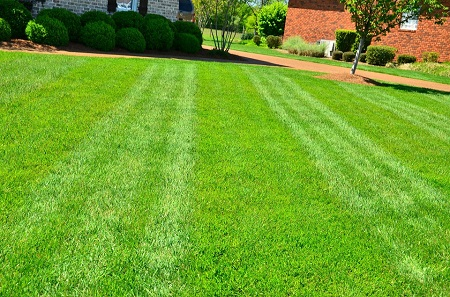 How to  lime your lawn?