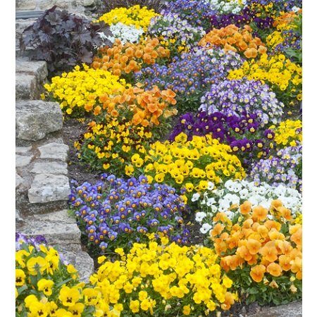 Perennial plants buying guide