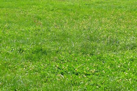 Wann Man Den Rasen Säen Und Das Gras Pflanzen Sollte