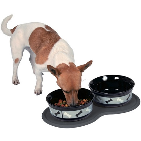 Dog bowl and automatic feeder buying guide
