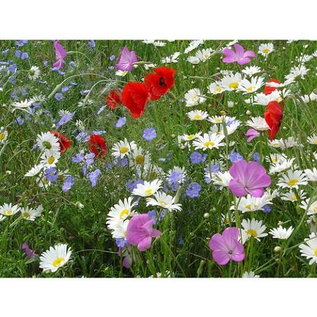 Welche Blumen Sät Oder Pflanzt Man Im April