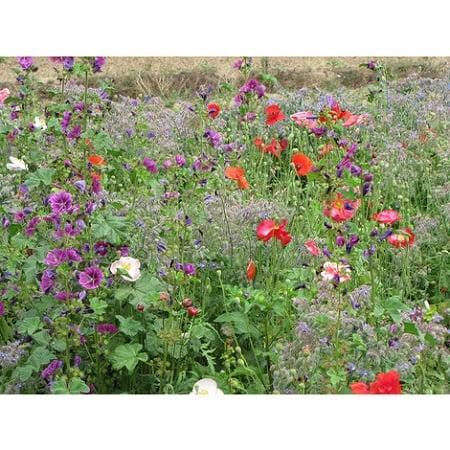 Wie man eine Blumenmischung auswählt