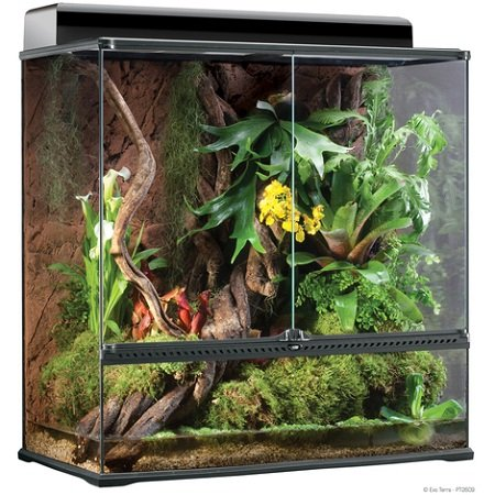 Reptile terrarium buying guide