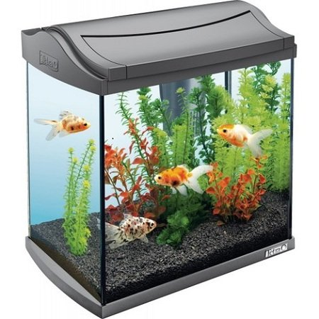 Small aquarium buying guide