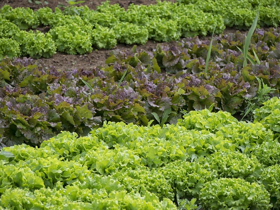 verduras y hortalizas plantar en marzo