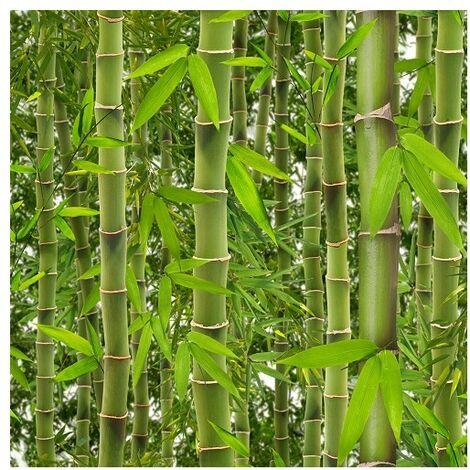J41504 Bambou VE Liasse Best ''Trompe l'oeil''