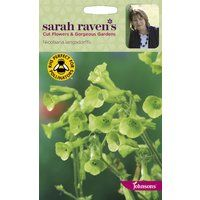 Johnsons - Sarah Raven's Cut Flowers - Nicotiana langsdorffii - 500 Seeds