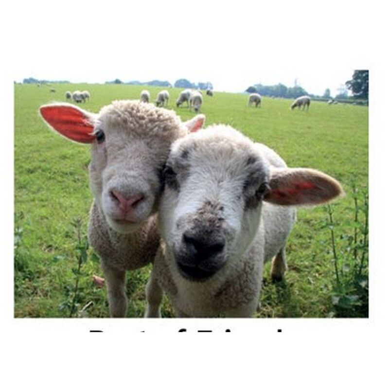 Image of Best of Friends Countryside Greetings Card (One Size) (Beige/Green) - Kevin Milner