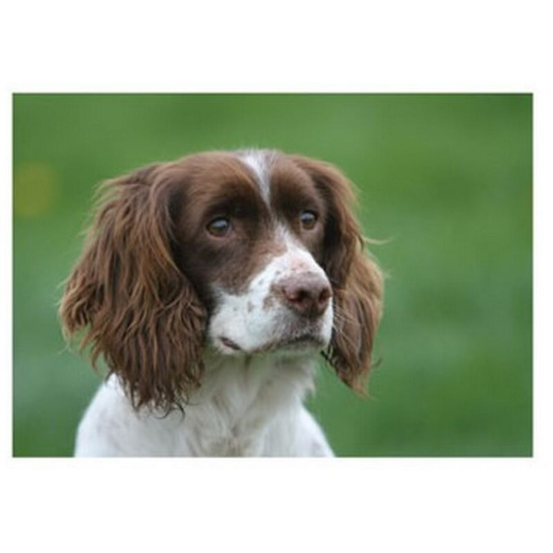 Image of Cocker Spaniel Countryside Greetings Card (One Size) (Green/Brown/White) - Kevin Milner