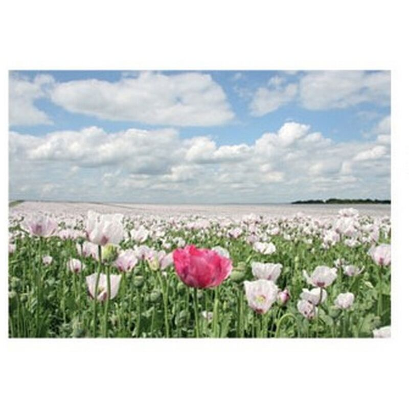 Image of Countryside Summer Poppies Greetings Card (One Size) (Multicoloured) - Kevin Milner