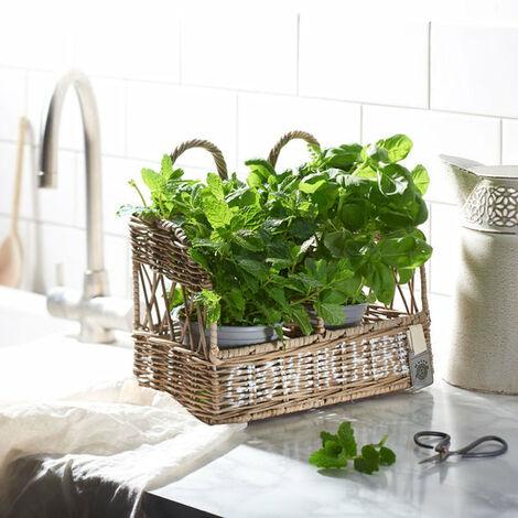 Key Largo Rattan Herb Display and Planter